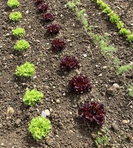 Les belles salades