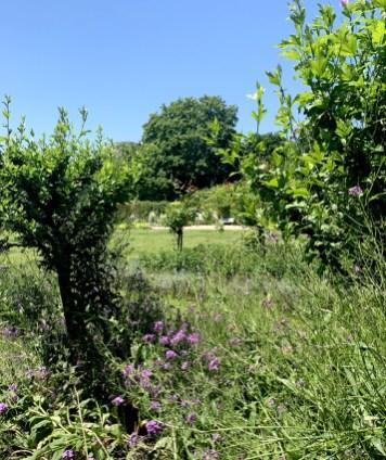 Jardin_de_la_paix_2