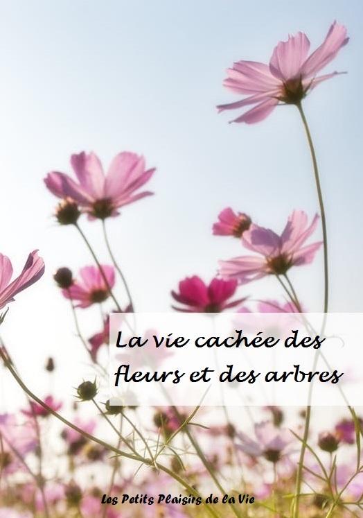 plantes fleurs nature