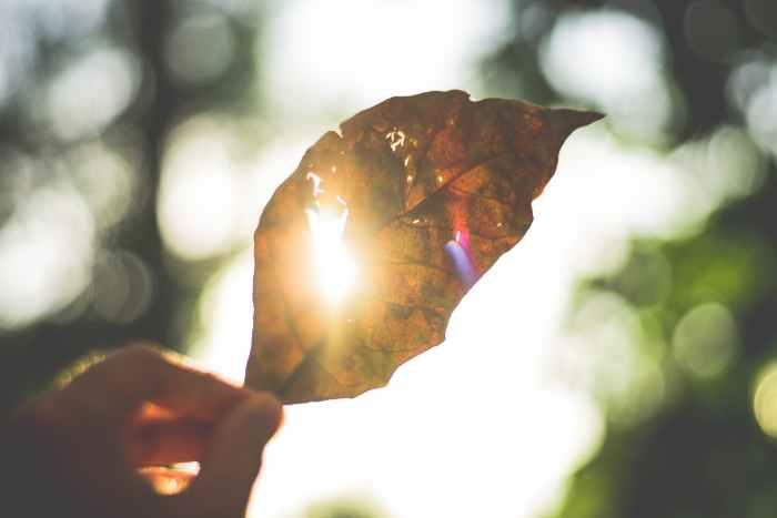 pleine conscience exercices blog developpement personnel