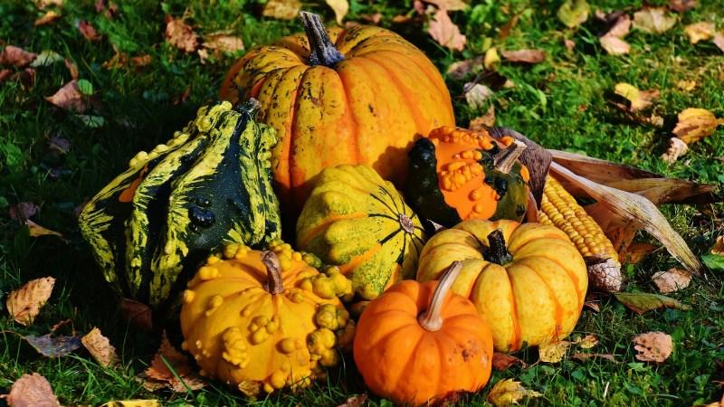 Zoom sur les fruits et légumes d'automne