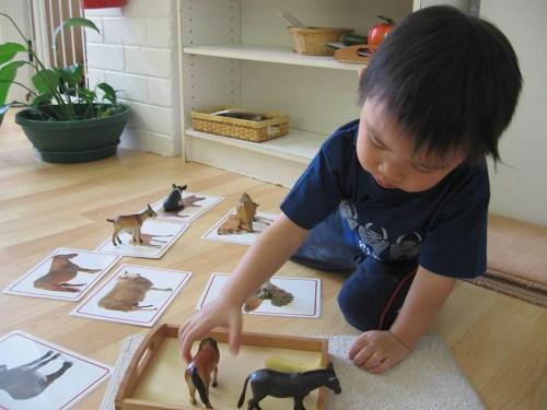 Bon cadeau Montessori