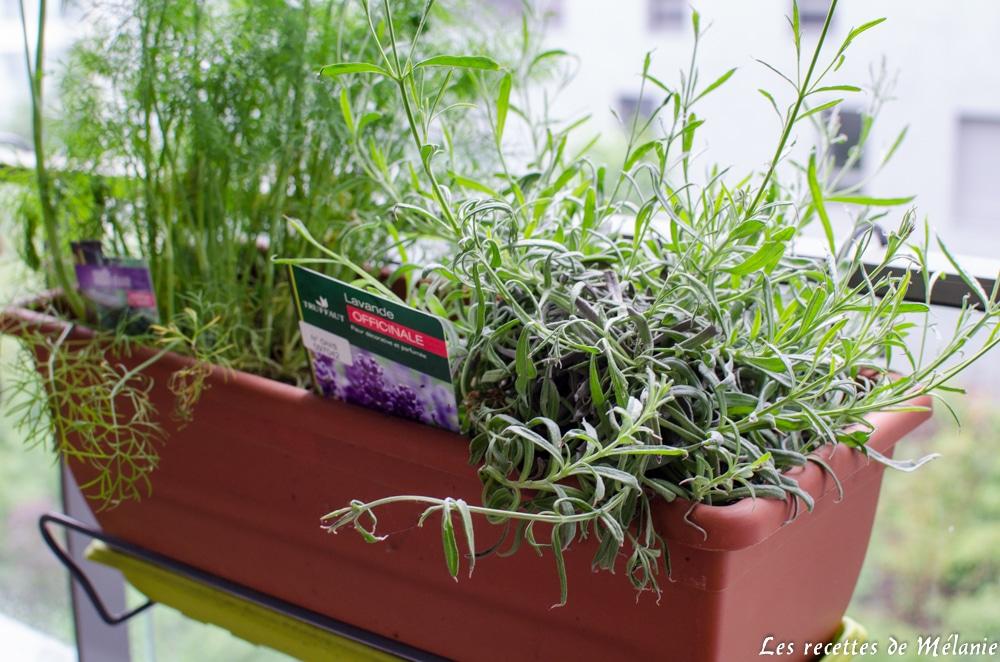 plantations sur mon balcon