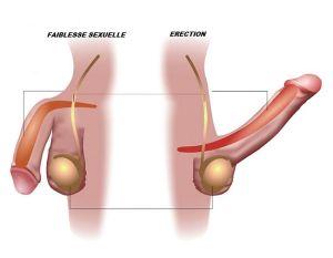 Remède naturel Faiblesse sexuelle