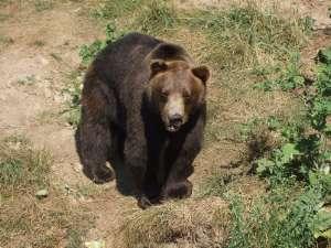 Parc national des Ours Dansants de Belitsa (Bulgarie, tourisme naturel) 7