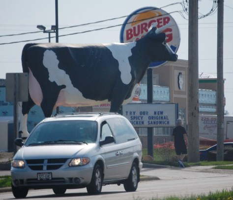 This was actually funny... a giant cow in front of Burger King and the sign is advertising chicken.  Shades of Chick-Fil-A