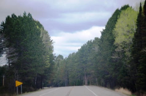 Pine trees along US Route 2 between Floodwood and Grand Rapids, MN