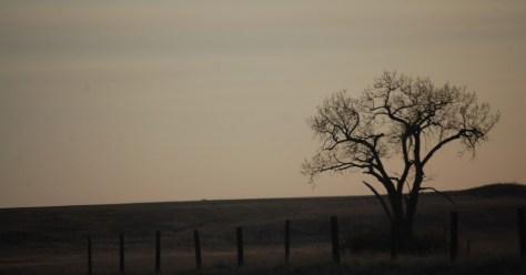 A lonely tree along the highway in Nebraska