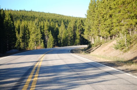 Most of the drive on US 89 south of Neihart is in the pine forests.