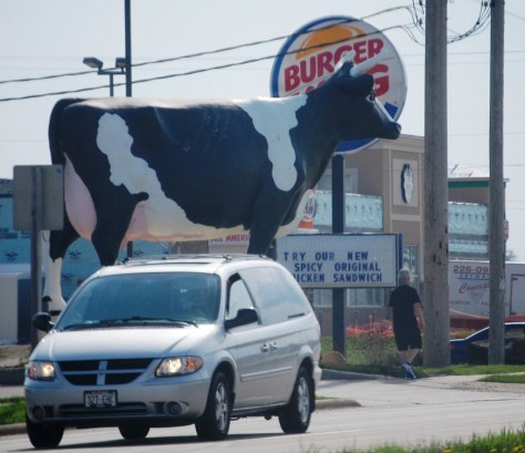 Sissy the Cow is at Ehlenbach's Cheese Factory in DeForest, WI