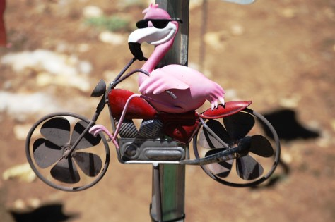 Flamingo biking