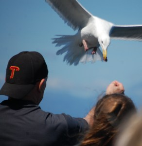 Feeding the seagulls on the ferry