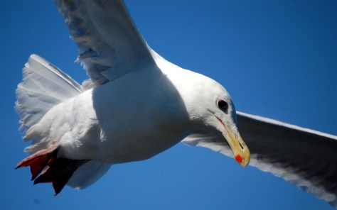 One seagull had his eye on some goodies