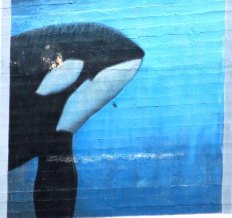Orca Wall Art in Seattle
