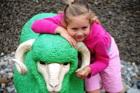 Granddaughter Livvy with a ram at the Mattress Ranch