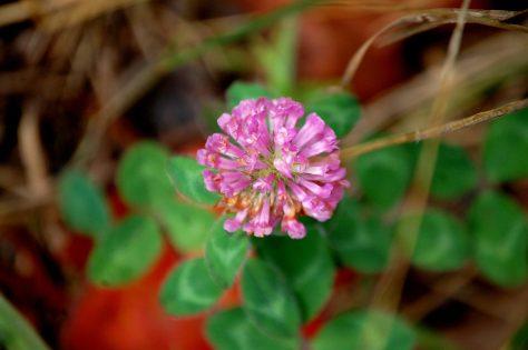 A nice pink flower