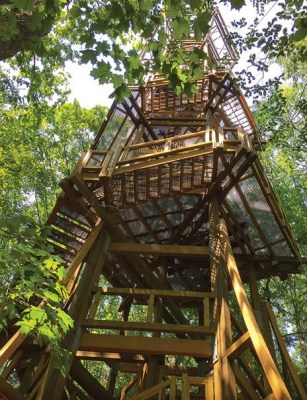 The Kalberer Emergent Tower at Holden Arboretum (photo from holdenarb.org)