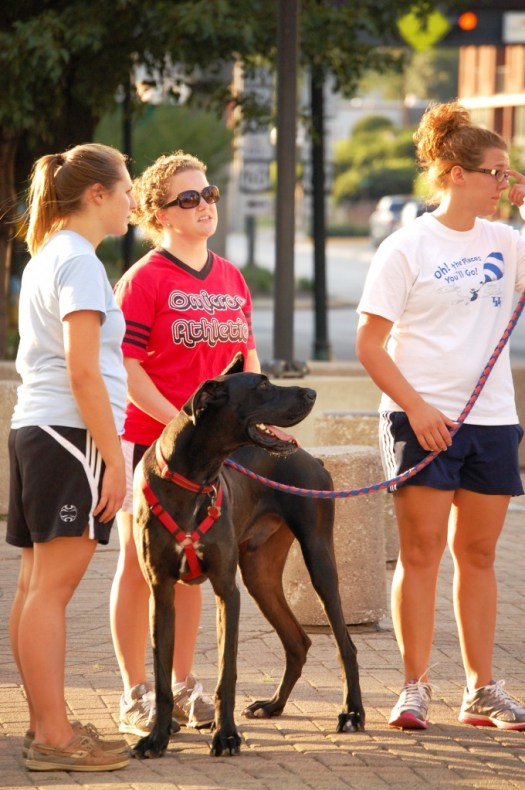 Walking the Dog - Lexington, Kentucky