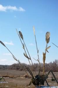 Wheat and Grasshopper
