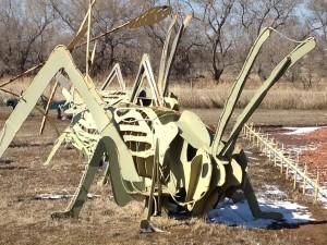 Medium Grasshopper