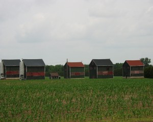 Tobacco Barns - Oxford County, Ontario