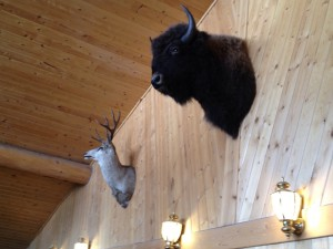 Buffalo and antelope at Chriswell's