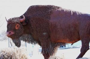 Big Buffalo in downtown Havre