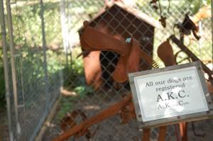 A.K.C. - All Kinda Cute