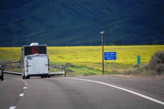 Amazing field of yellow north of Pocatello, Idaho