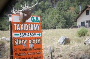 G.B. Taxidermy, Salida, Colorado