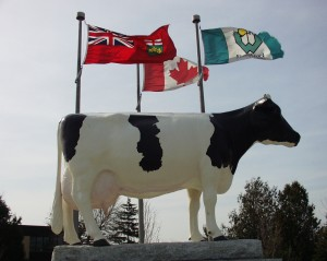 Snow Countess - large cow statue in Woodstock, Ontario