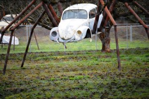 Spider Volkswagen - Wolf Creek, Oregon