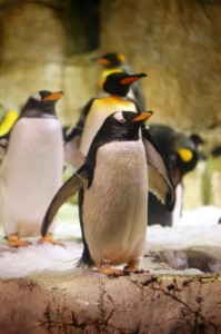 Penguins at Henry Doorly Zoo in Omaha
