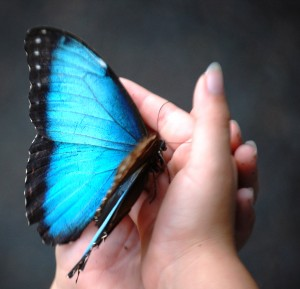 Granddaughter holding Blue Morphos