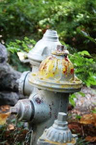 Hydrant Collection at back yard gate