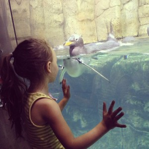 Grand daughter Joselyn face to face with a Penguin (photo by Marissa Noe)