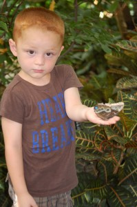 Landen with a butterfly at the Butterfly House near St. Louis (caught the bug again!!)