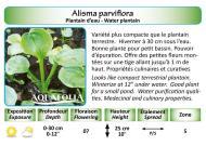 ALISMA PARVIFLORA_5X7
