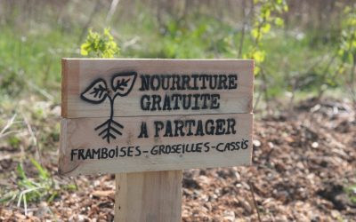 #ACTION – Incroyables Comestibles – Plantation de petits fruitiers