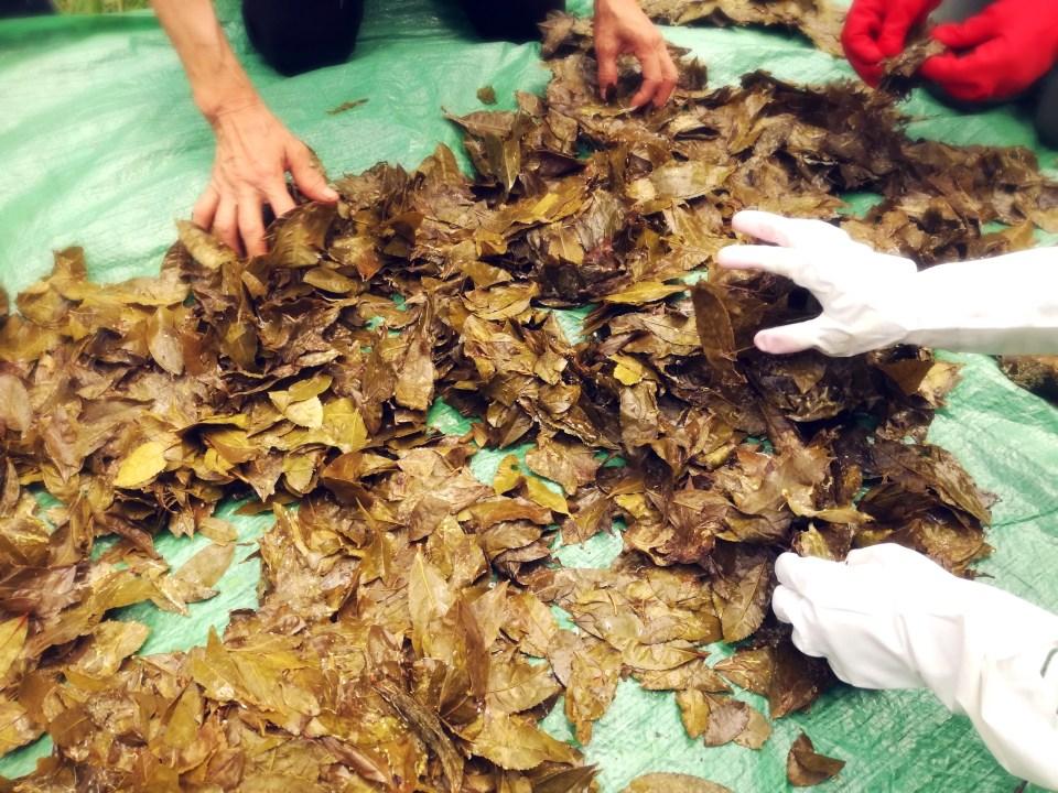 紅茶教室 東京  銀座 石鎚黒茶