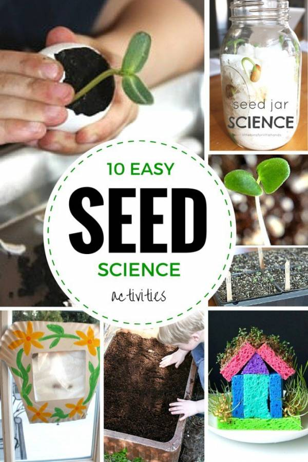 seed science experiments for kids