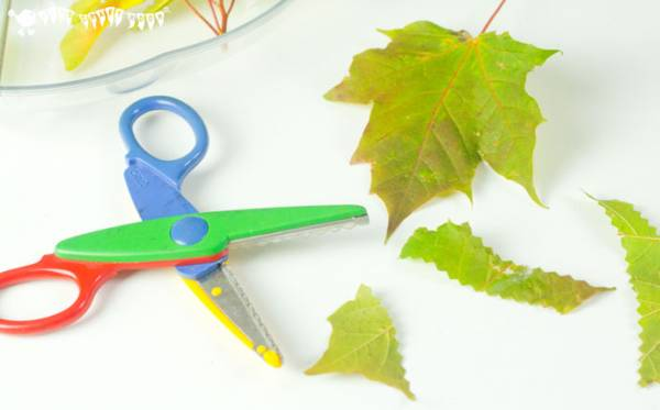 explore the changing seasons with a sensory cutting tray