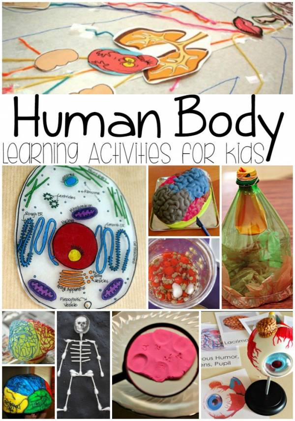 human body learning activities