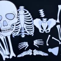 Grab a Life-Sized Printable Skeleton for Fun Learning