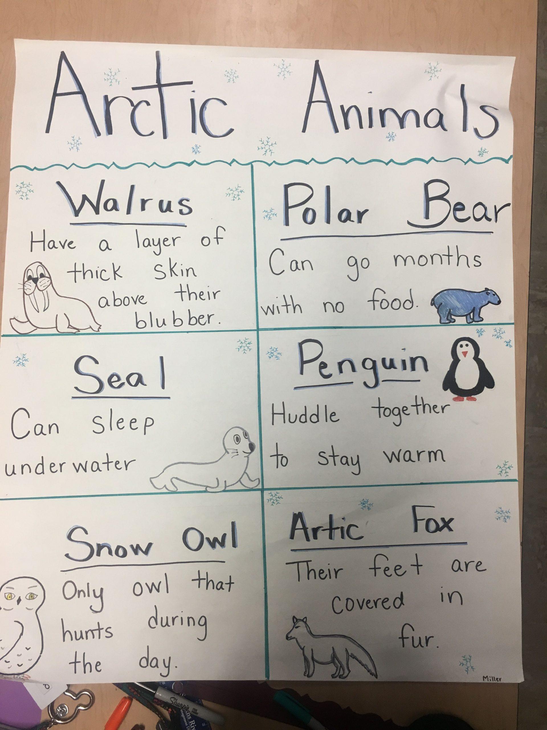 Arctic Animals Preschool Lesson Plans