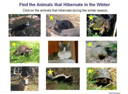 interactive hibernation game - choose the animals that hibernate
