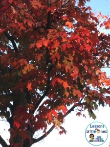 pictures of signs of fall