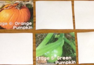 pumpkin life cycle games
