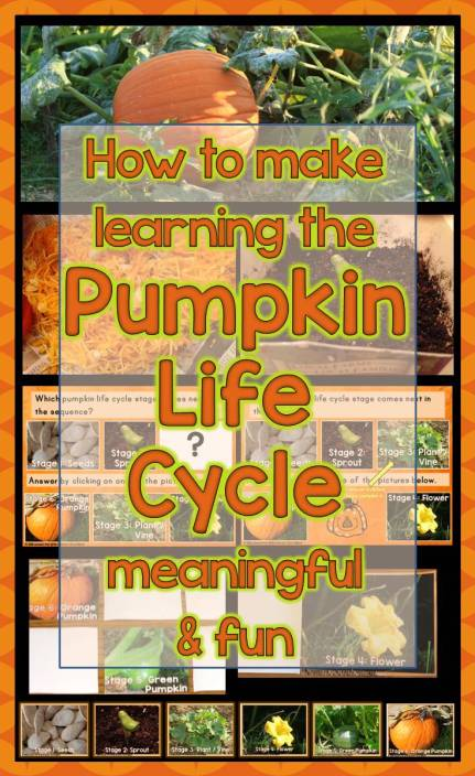 How to Make Learning the Pumpkin Life Cycle Meaningful and Fun