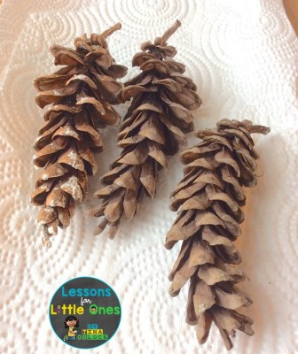 pine cone science experiment